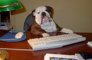 bulldog writer